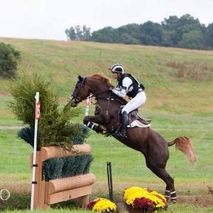 New Forrest pony Forrest Nymph aka Farrah aka the Flying pony